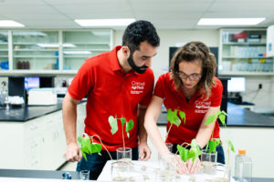 Cornell CALS AgriTech plant research laboratory