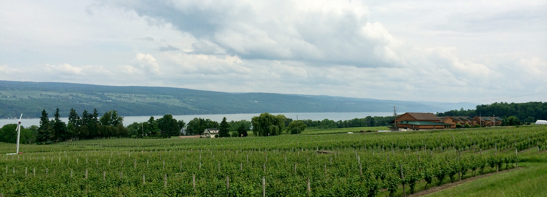 Glenora Vineyards and In on Seneca Lake
